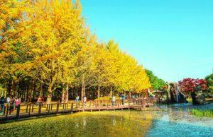 Tour đi Hàn Quốc 5 ngày 4 đêm : Tham quan các thắng cảnh đẹp nhất
