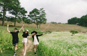 Tour Mộc Châu mùa hoa cải – đồi chè trái tim (2N1Đ)