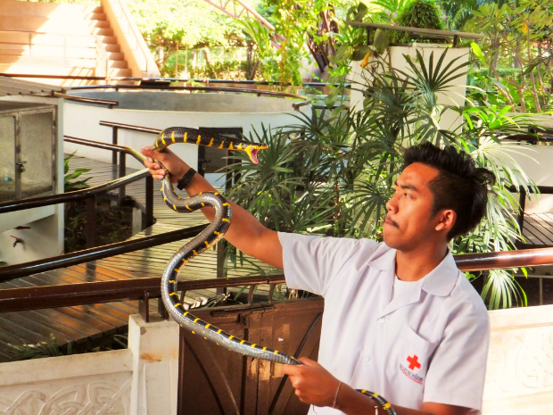 Viện nghiên cứu rắn Hoàng Gia Thái Lan