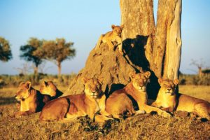 Visa đi Angola du lịch