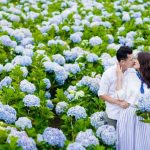Lưu liền 4 vườn cẩm tú cầu tuyệt đẹp cho chuyến du xuân Đà Lạt