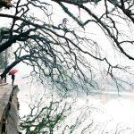 Những khoảnh khắc đẹp của mùa đông Hà Nội