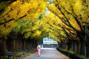 Những điểm đến không thể bỏ qua ở Tokyo Nhật Bản