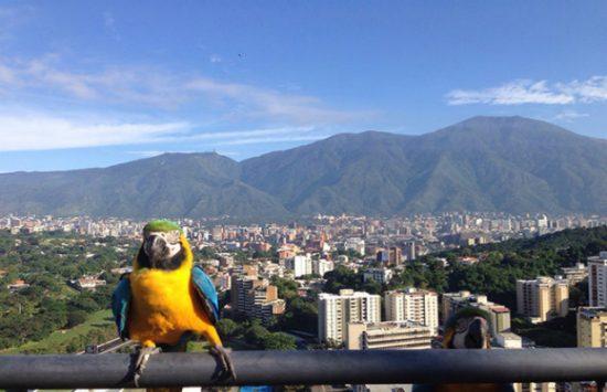 xin visa đi venezuela du lịch