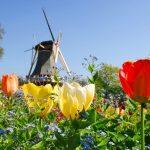 Book vé rẻ đi Hà Lan tháng 4 & 5 ngắm tulip vườn Keukenhof