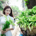 Mua vé máy bay đi Hà Nội tháng 4, mùa hoa loa kèn nở