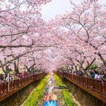 Trải nghiệm mùa lễ hội ở Hàn Quốc với vé máy bay giá rẻ tháng 4