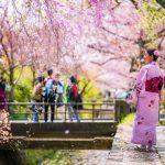 Mua vé máy bay đi Nhật Bản lạc giữa ngàn hoa anh đào