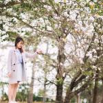 Tour Điện Biên 3 ngày 2 đêm từ Hà Nội | Tận hưởng mùa hoa ban trắng Tây Bắc