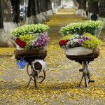 Dắt tay nhau ra Hà Nội ngắm những mùa hoa mùa hè này