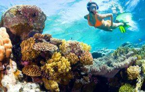 Đến Sơn Trà lặn ngắm san hô tuyệt đẹp
