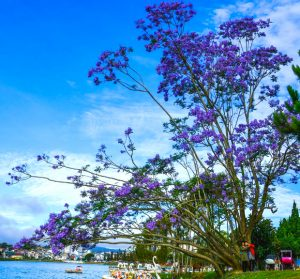 Tour khám phá Đà Lạt | Lãng mạn xứ sở ngàn hoa