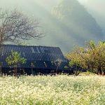 Tour du lịch 2N1Đ: Đạp xe Mai Châu- Hái mận Mộc Châu