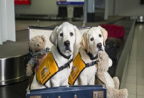 Những thú cưng được phép mang lên máy bay