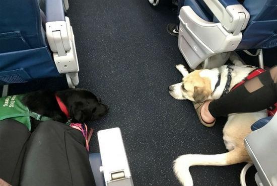 Cân nặng cho phép thú cưng trên chuyến bay