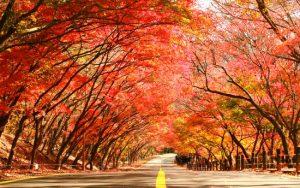 Vẻ đẹp thiên nhiên mùa thu Hàn Quốc làm say lòng du khách