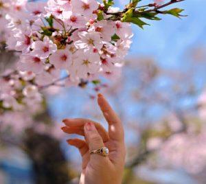 Du lịch Hàn Quốc mùa nào đẹp?