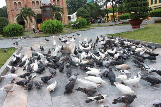 Vui đùa với chim bồ câu ở Nhà thờ Đức Bà