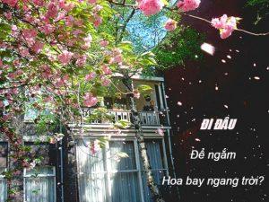 """4 khách sạn-resort tại Sapa thỏa sức ngắm """"hoa bay giữa trời"""""""