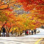 Du lịch Hàn Quốc 6N5D | thủ đô Seoul | đảo Jeju | Everland