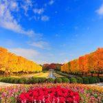 Du lịch Nhật Bản: Ngây ngất sắc thu Narita – Núi Phú Sĩ -Nagoya – Tokyo 5N4Đ