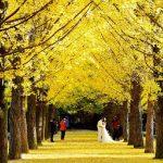 Khám phá xứ sở kim chi mùa thu vàng: Seoul – đảo Nami – Everland – Painter Hero 5N4Đ