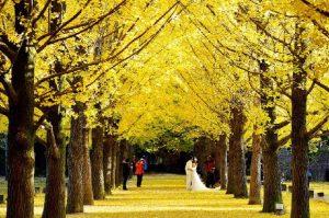 Khám phá xử sở kim chi mùa thu vàng: Seoul – đảo Nami – Everland – Painter Hero 5N4Đ