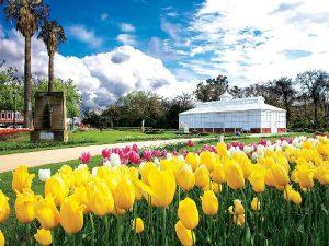 Tháng 9 đến tháng 11: Quyến rũ như mùa xuân nước Úc