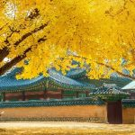 Tour du lịch Hàn Quốc mùa thu 2018 | Seoul | Nami | Everland 5N4Đ