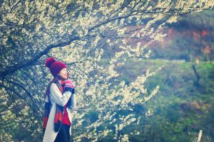 Tour du lịch Hà Nội – Mộc Châu – Happy Land 2N1Đ