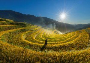 Vì sao không nên du lịch Mù Cang Chải mùa lúa chín?