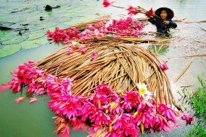 Du lịch tháng 11 – Đẹp ngỡ ngàng sắc hoa khắp nẻo đường đất nước