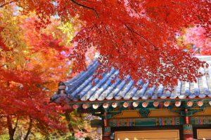 Hàn Quốc tháng 10 – Khi nàng thu gõ cửa