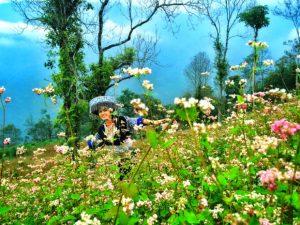 Kinh nghiệm du lịch Hà Giang tháng 11 ngắm hoa tam giác mạch