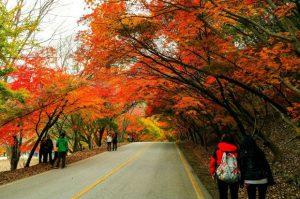 Kinh nghiệm xin visa du lịch Hàn Quốc 2019 chi tiết nhất