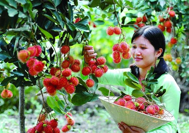 Vườn trái cây trĩu quả miền Tây
