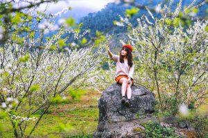 Lên kế hoạch du lịch Mộc Châu ngắm mùa hoa mận nở trắng trời