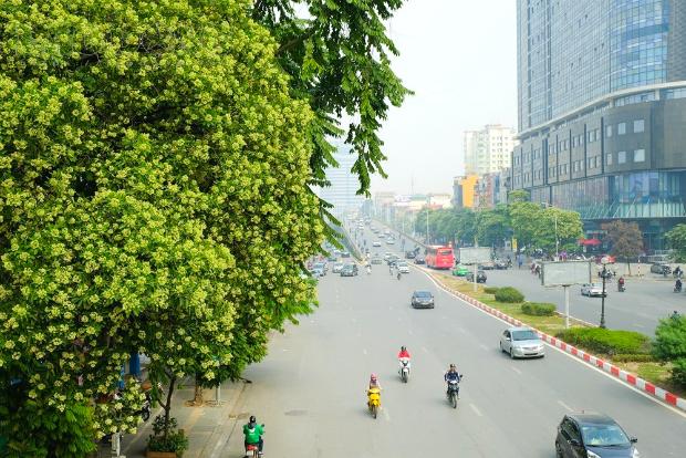 Những mùa hoa Việt Nam
