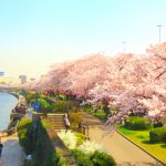 Tour du xuân Nhật Bản 4N3Đ | Tokyo – Hakone – Núi Phú Sĩ – Yokohama | Giá ưu đãi