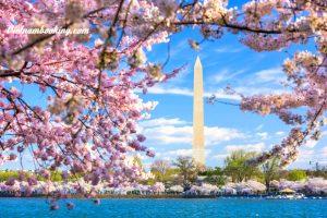 Tour du lịch Mỹ 8N7Đ: Chiêm ngưỡng vẻ đẹp Washington D.C mùa hoa anh đào | khám phá New York – Philadelphia