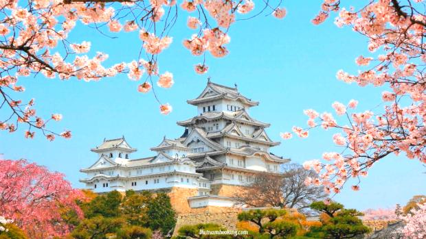 Mùa hoa anh đào Nhật Bản – Điểm ngắm hoa ấn tượng nhất