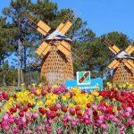 Festival hoa Đà Lạt – Điểm hẹn sắc màu cao nguyên
