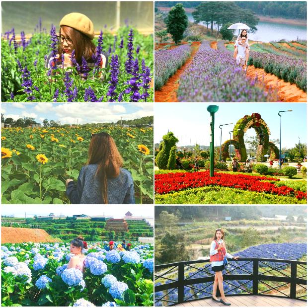 vườn hoa Đà Lạt - điểm du lịch nổi tiếng ở đà lạt