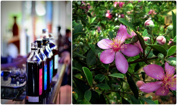 Cơ sở sản xuất rượu sim Phú Quốc