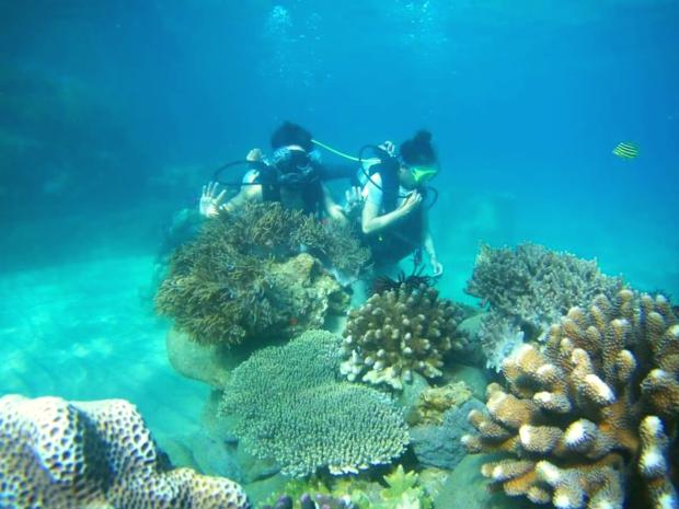 Tour lặn biển ngắm san hô bán đảo Sơn Trà