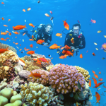 Tour Lặn Ngắm San Hô Bán Đảo Sơn Trà: Đại Dương Huyền Bí Muôn Màu, Muôn Vẻ