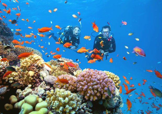 Lặn san hô  tại bán đảo Sơn Trà khi du lịch Đà Nẵng được nhiều người ưa chuộng