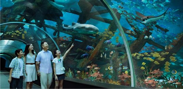 Thủy cung SEA Aquarium | Tour Malaysia Singapore 4 ngày 3 đêm