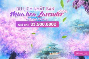 Tour Du Lịch Nhật Bản Từ Đà Nẵng: Lễ Hội Hoa Lavender – Mộng Mơ Sắc Tím Xứ Phù Tang