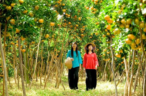 Trái cây miệt vườn Bến Tre  tour du lịch đồng bằng sông Mekong